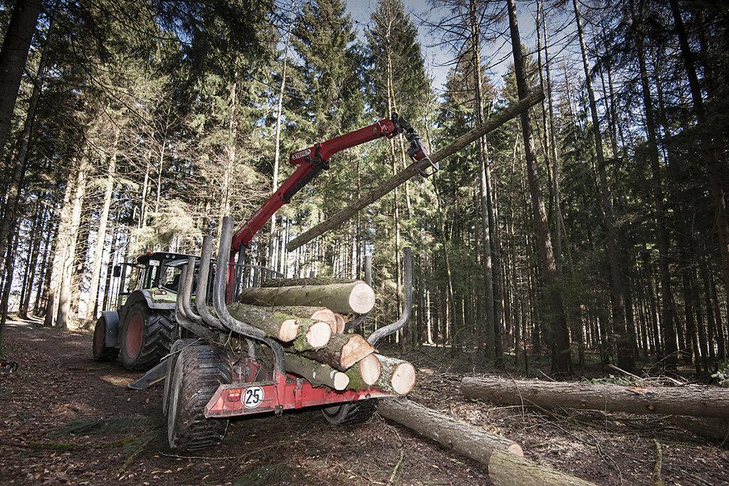 März 2017. Baumfällung durch Bernhard Maierhofer.